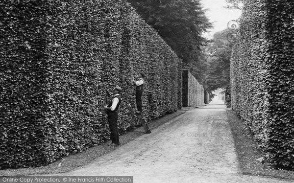 Photo of Bramham, Gardeners Cutting The Beech Hedge 1909