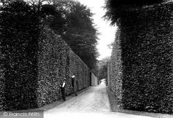 Park, Beech Hedges 1909, Bramham