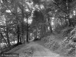 Buckland Woods 1936, Braunton