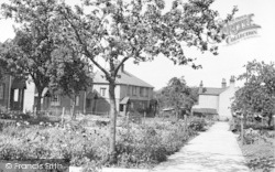 Bredgar, Primrose Grove c.1955
