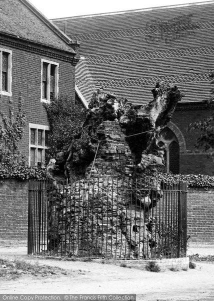 Brentwood, Hunter's Elm 1895