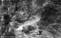 Bridge Of Allan, Cockburnspath Woods 1899
