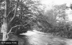 Bridgend, Ogmore Woods 1898