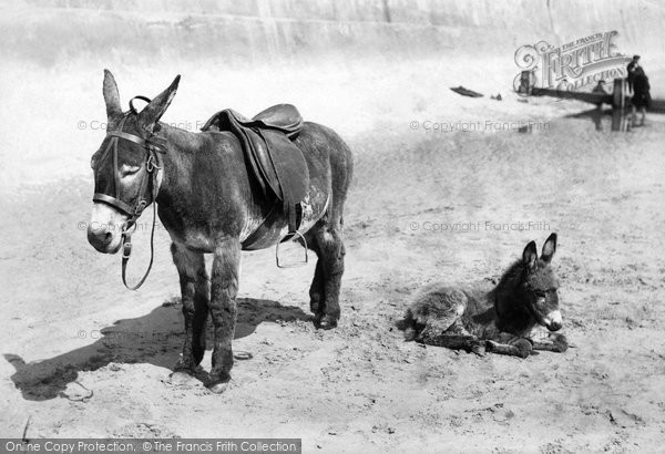 Bridlington, Donkey And Foal 1906