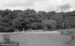 Brockenhurst, The Foxhounds At Balmer Lawn 1954