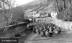 Buckden, Driving Sheep Through The Village c.1955