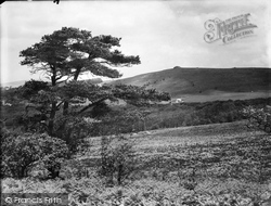 Beacon From Ashburton Road 1931, Buckland In The Moor