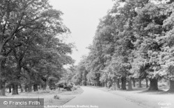 Bucklebury, Common, The Avenue Of Oaks c.1955
