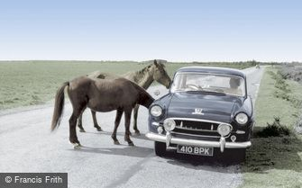 Bucklers Hard, New Forest Ponies c1960