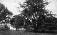 Budleigh Salterton, Cedars At Bicton House 1890