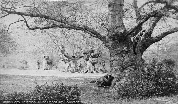 Burnham, Beeches c.1890