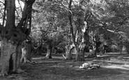 Burnham, Beeches, Old Trees c.1955