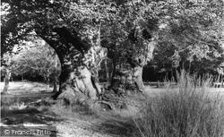 Burnham, The Beeches c.1955