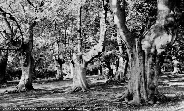 Burnham, The Beeches c.1955