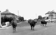 Burraton, the Village c1960