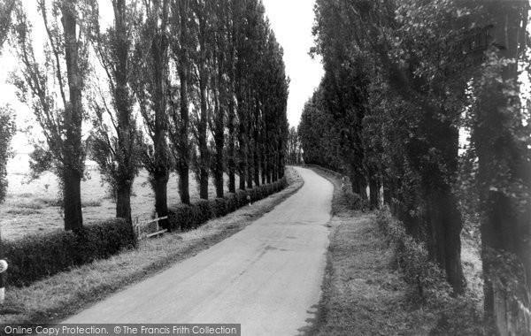 Burton Joyce, The Poplar Walk c.1965