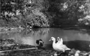 Burwash, The Pond, School Lane c.1960