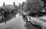 Byfleet, River Wey From Parvis Bridge c.1955