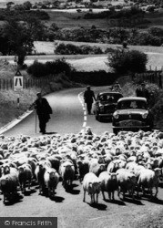 Cadair Idris, Herding Sheep c.1960