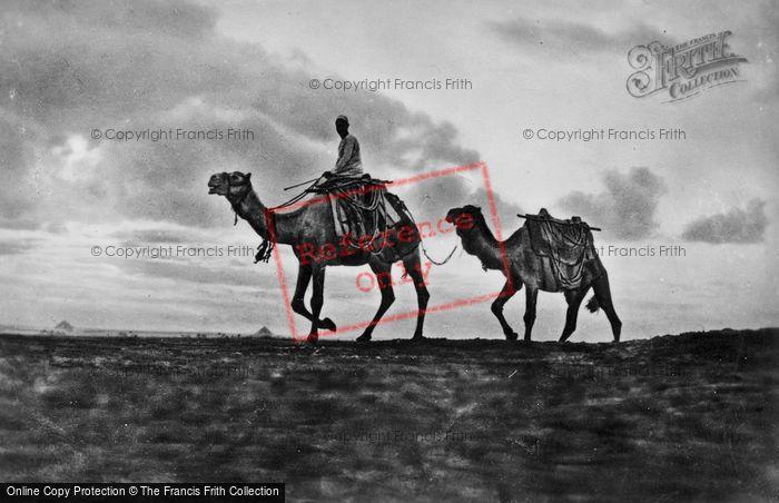 Photo of Cairo, A Camel Rider c.1920