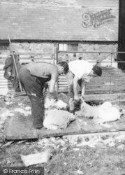 Caldbeck, Sheep Shearing c.1955