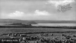 Island Sheep c.1950, Caldey Island