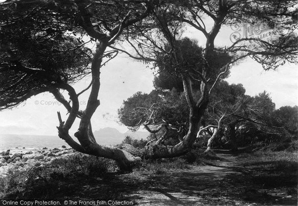 Photo of Cannes, St Honorat, The Pines 1890