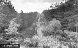 Cannock, Cannock Chase c.1955