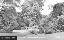 Caversham, Court, Strawberry Tree c.1955