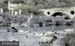 Cenarth, Sheep Dipping c1960
