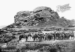 Chagford, Kestor Rocks And Dartmoor Ponies 1906