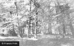 Chalfont St Peter, The Beech Woods c.1960
