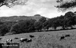 Chanctonbury Ring, c.1960