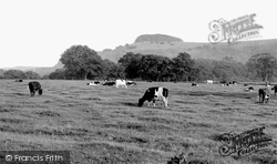 Chanctonbury Ring, c.1960