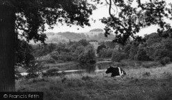 Chanctonbury Ring, The Ring And Wiston Pond c.1960