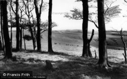 Chanctonbury Ring, View Of The Downs c.1960