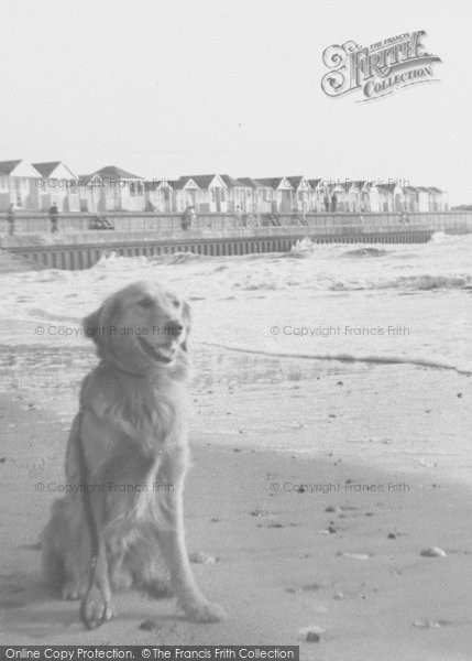 Photo of Chapel St Leonards, Dog On The Beach At Chapel Point c.1955