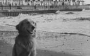 Chapel St Leonards, Dog On The Beach At Chapel Point c.1955