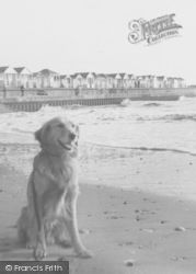 Chapel St Leonards, Dog On The Beach At Chapel Point c.1955