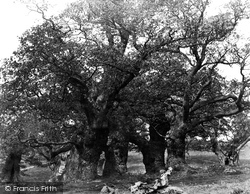 Oaks In The Old Deer Park c.1864, Chatsworth House