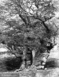 Park, Oak Study c.1864, Chatsworth House