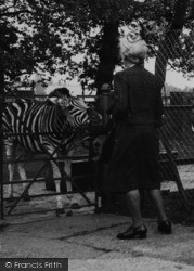 Chessington, Zoo, A Zebra Encounter c.1952