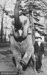 Chessington, Zoo, Elephant c.1960
