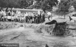 Chessington, Zoo, Feeding The Sea Lions c.1965