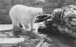 Chessington, Zoo, The Polar Bears c.1965