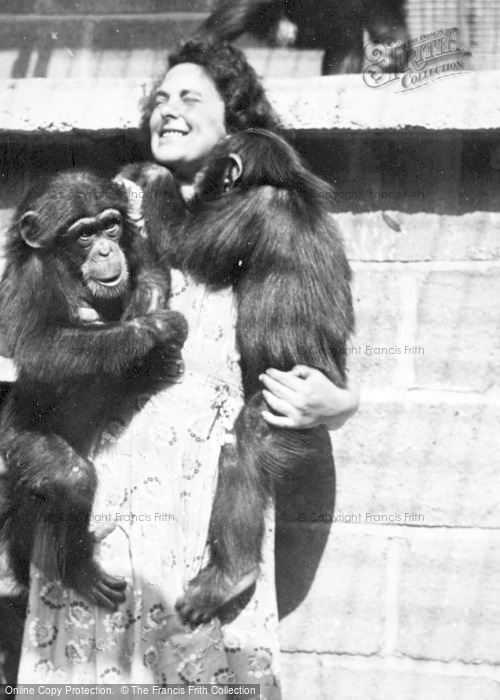 Photo of Chester Zoo, Affectionate Chimps c.1950