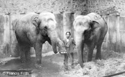 Chester Zoo, Asian Elephants c.1950