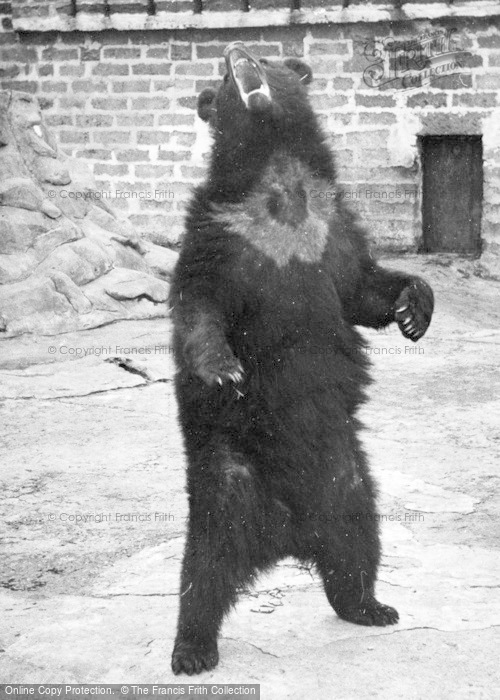 Photo of Chester Zoo, Bear c.1955