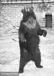 Chester Zoo, Bear c.1955