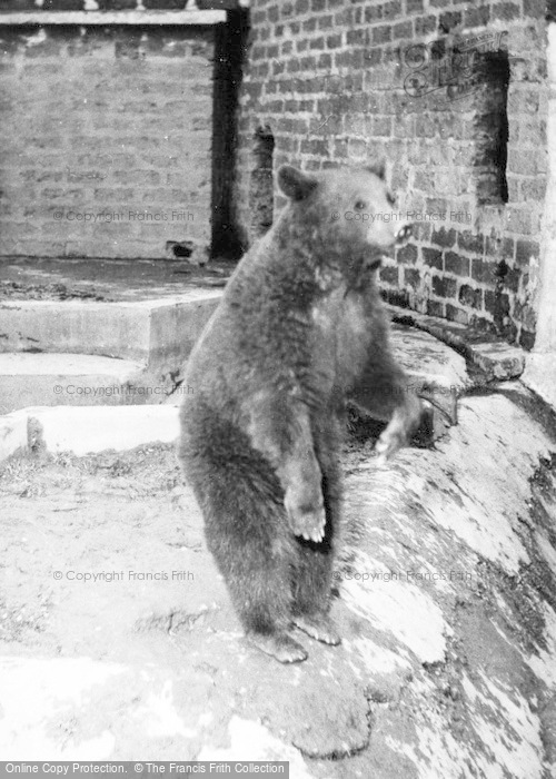 Photo of Chester Zoo, Bear c.1960
